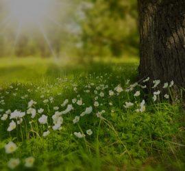 La Naturopathie répond à mes valeurs en tant que métier d'entrepreneu indépendant - Vitalité Boostée